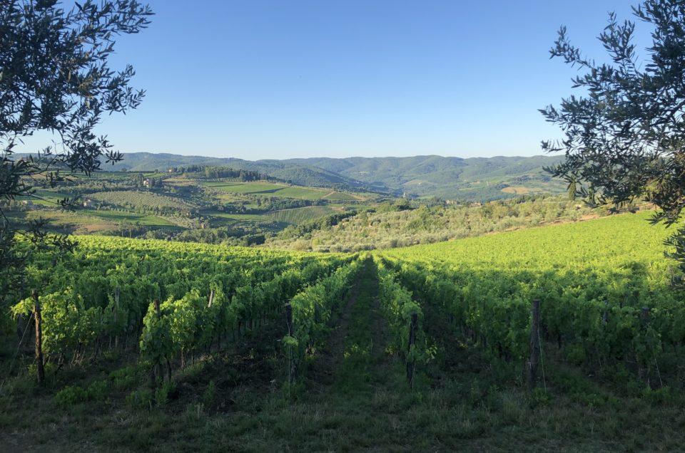 Explore Chianti Classico Wines