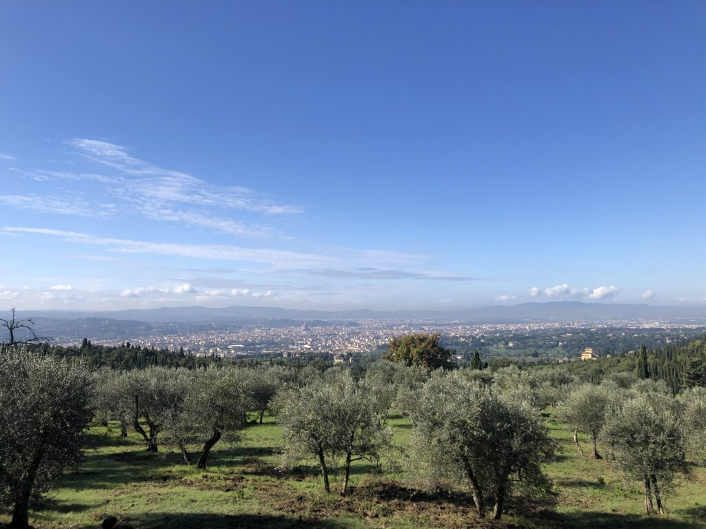 olive groves Florence