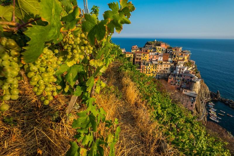 Taste Wine in the Cinque Terre