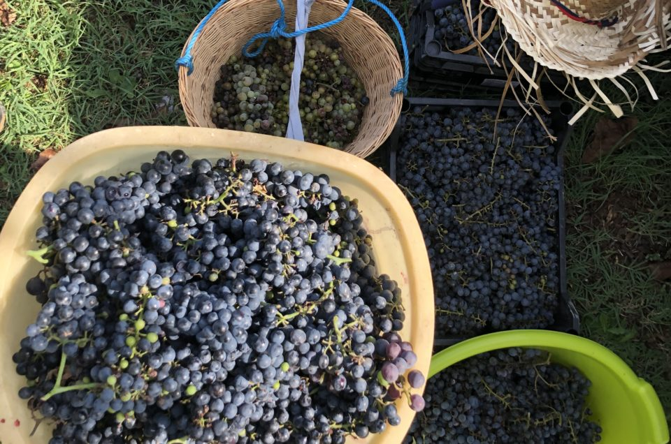 Harvesting in Tuscany
