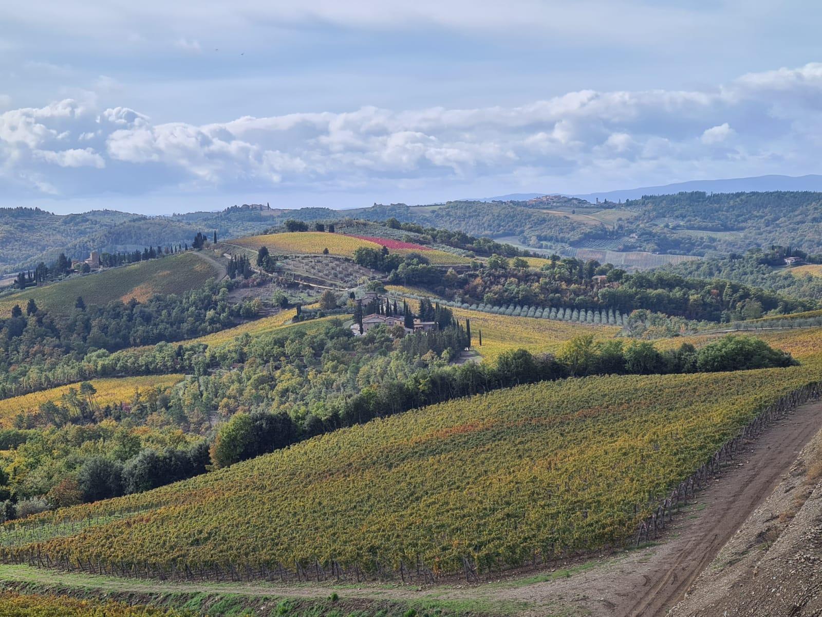 Chianti Classico Landscape