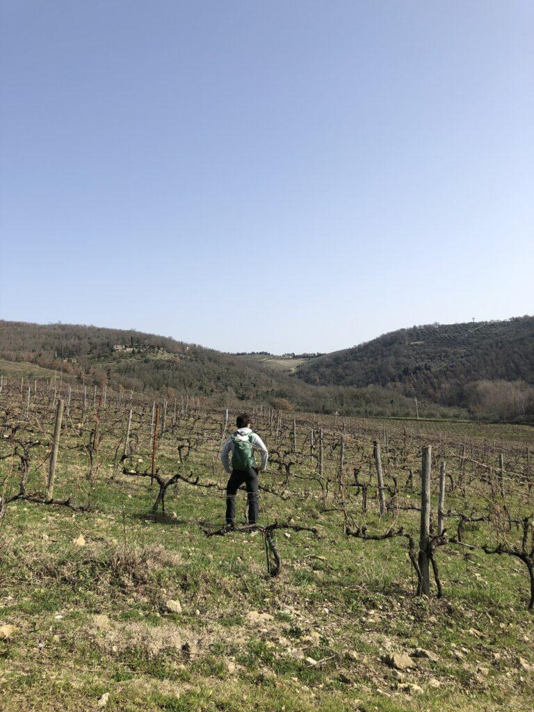 me walking through vineyards