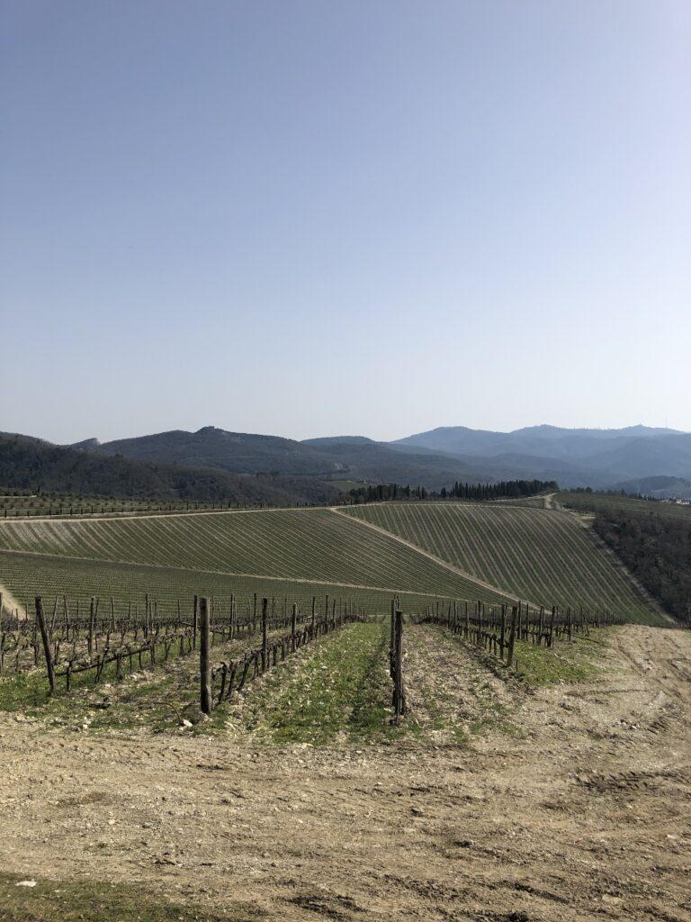 vineyards around Gaiole in Chianti