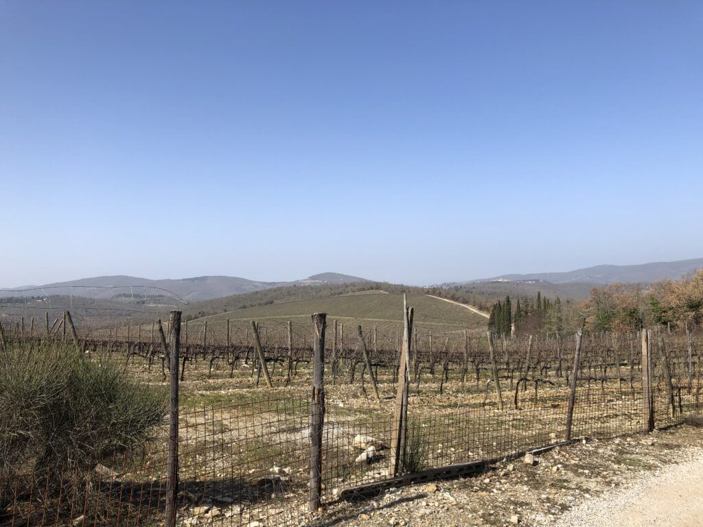 Vineyards and Woods in Chianti Classico