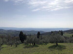 Olive groves hiking